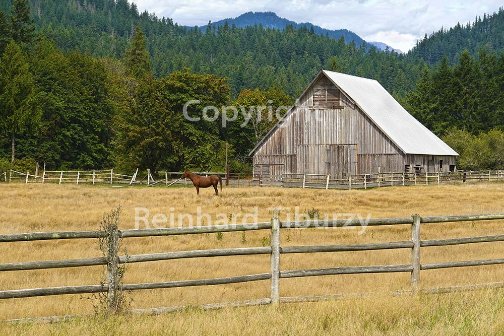 old wooden, barn, horse, pasture, fenced, wooden, fence,